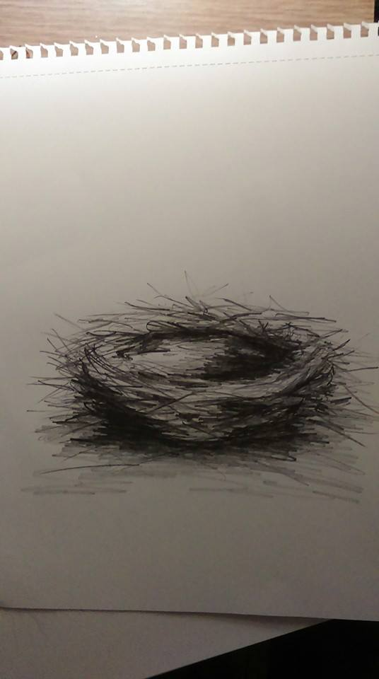drawing of bird's nest